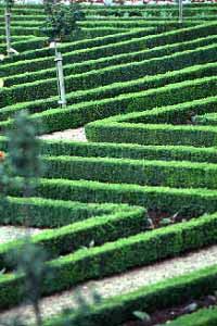 Villandry_jardin