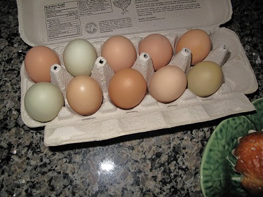 Farmers market eggs02