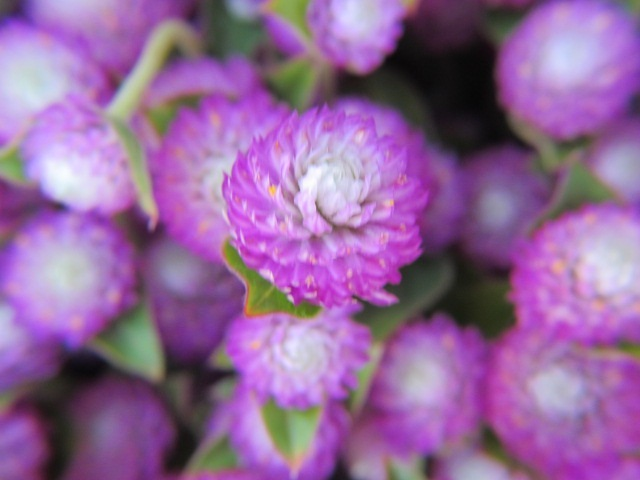 Sf flowers 02