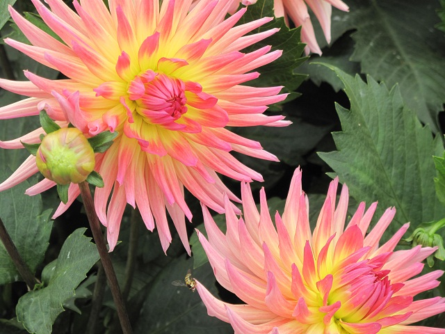 Sf flowers 01